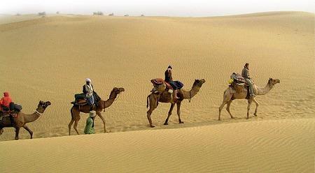 Camel Safari en los Desiertos de India
