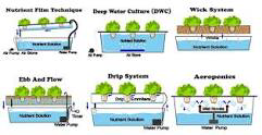 Different Hydroponic Systems