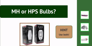 MH and HPS Bulbs
