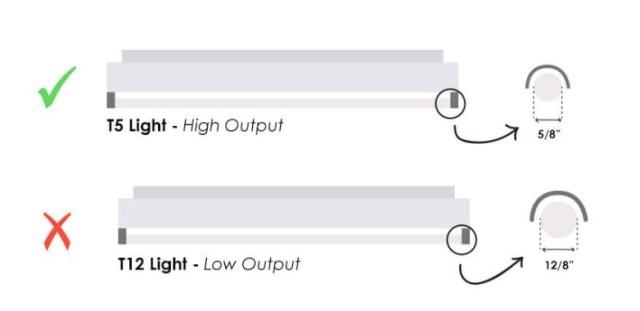 T5 vs T12 Fluorescent Lights