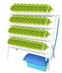 Vertical Aquaponics