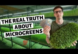 The Real Truth About Growing Microgreens For Profit