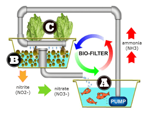 How dwc aquaculture works
