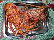 Fresh crayfish - what a treat