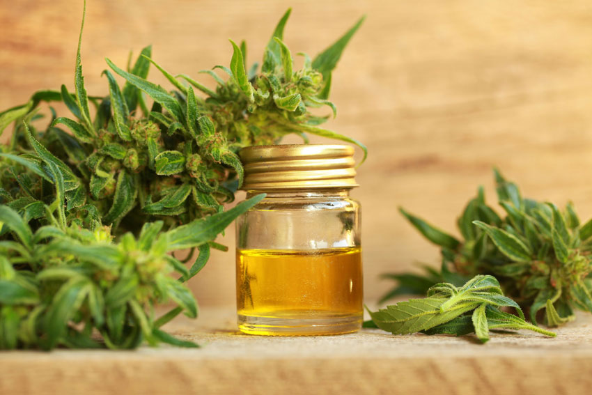 Terpinolene in CBD: The terpene that helps us fight cancer