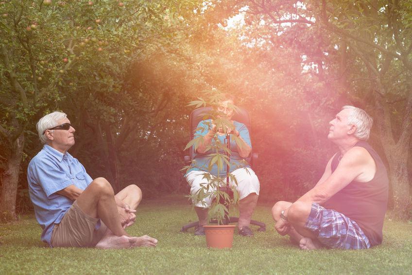 CBD & Cannabis MINIMIZE PHARMACOLOGICAL PRESCRIPTIONS IN THE ELDERLY