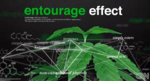 MyInsomniaFix Entourage-Effect