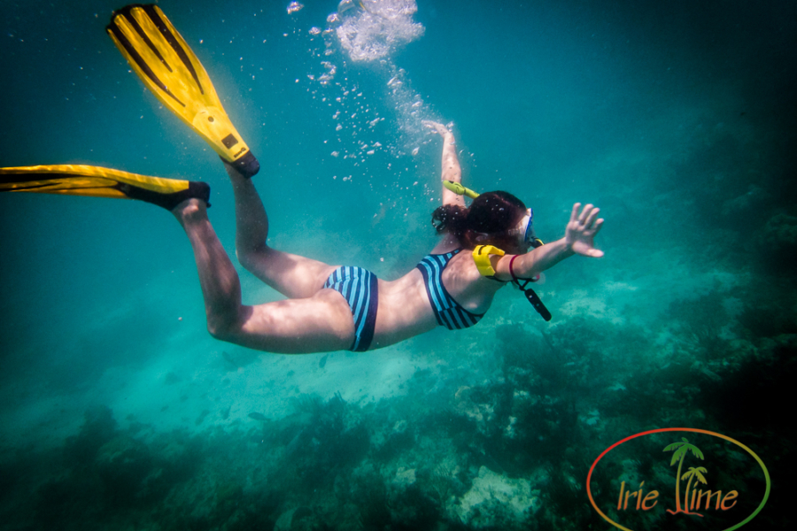 Underwater Camera Review: Olympus Tough TG-4 and TG-3