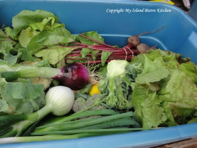 Large-sized CSA box