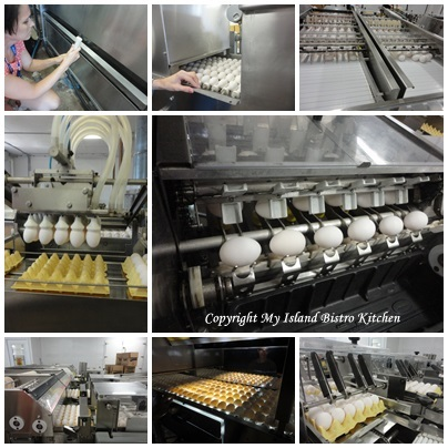 Some of the activities in the egg grading process