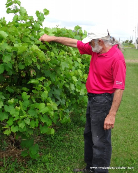 John Rossignol checks the status of the grapes on the grapevines at his winery in Little Sands, PEI