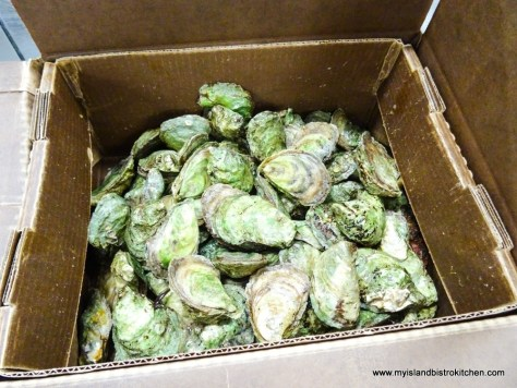 "A Box of ""Lucky Limes"" Oysters from Raspberry Point Oyster Company in PEI"