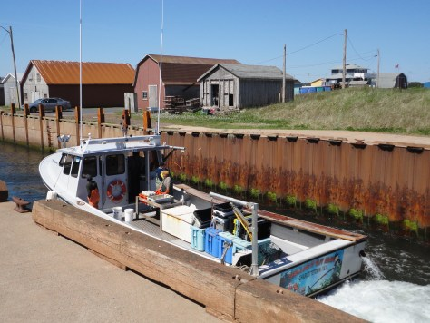 Arriving back in North Lake, PEI, with the day's catch