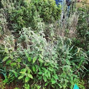Botanical Gardens in Tel Aviv: Mediterranean Shrub