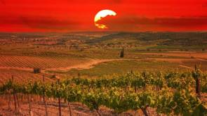 Sunset over Israeli vineyards