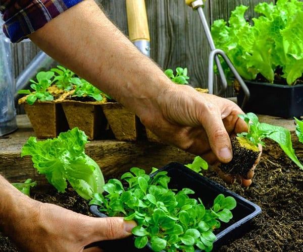 Come fare giardinaggio per sconfiggere lo stress