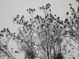 Облюбовали верхушку дерева