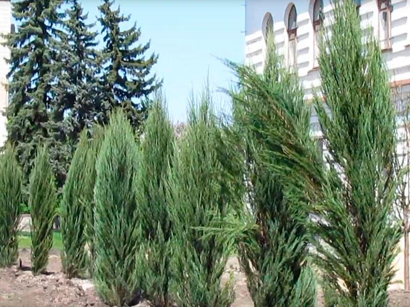 Все зеленые насаждения были приобретены в городе Бахмут на общую сумму 29 тыс. гривен