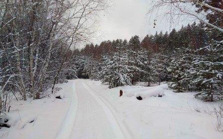 Дорога в зимнем лесу у Изюма
