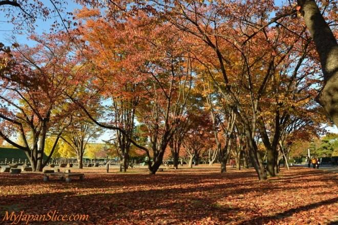 Japan_Autumn_Yamagata