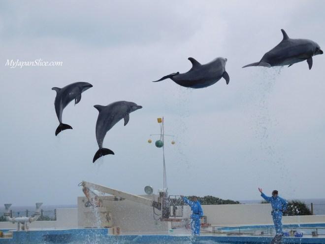 okinawa_expo_park_1