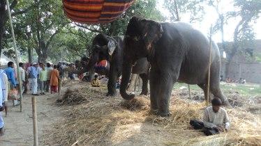 Sonepur Mela Patna
