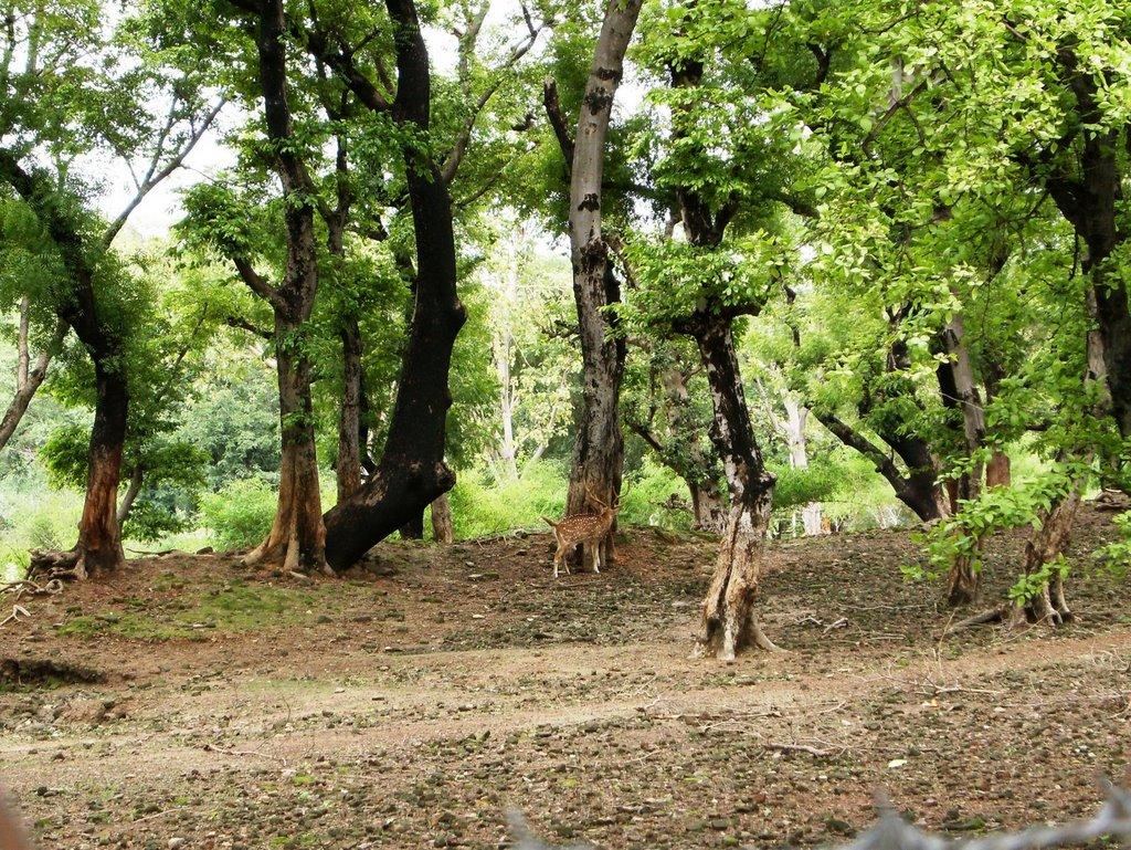 Fish aquarium in varanasi - Deer Park Varanasi A Safe Dwelling Place For The Animals My Journey Through India
