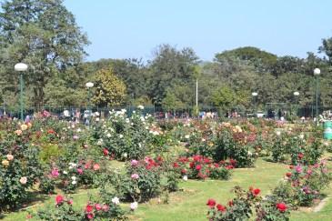 Rose Garden In Jubilee Park Jamshedpur