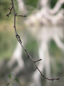 Forget the magnificent tree in the background, I want people to focus on the beauty of a simple twig! :)