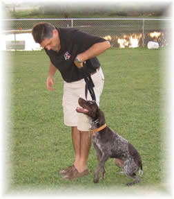 private obedience training