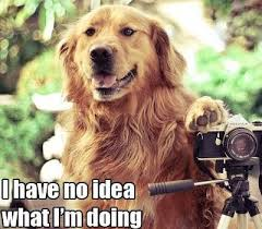 dog taking pictures