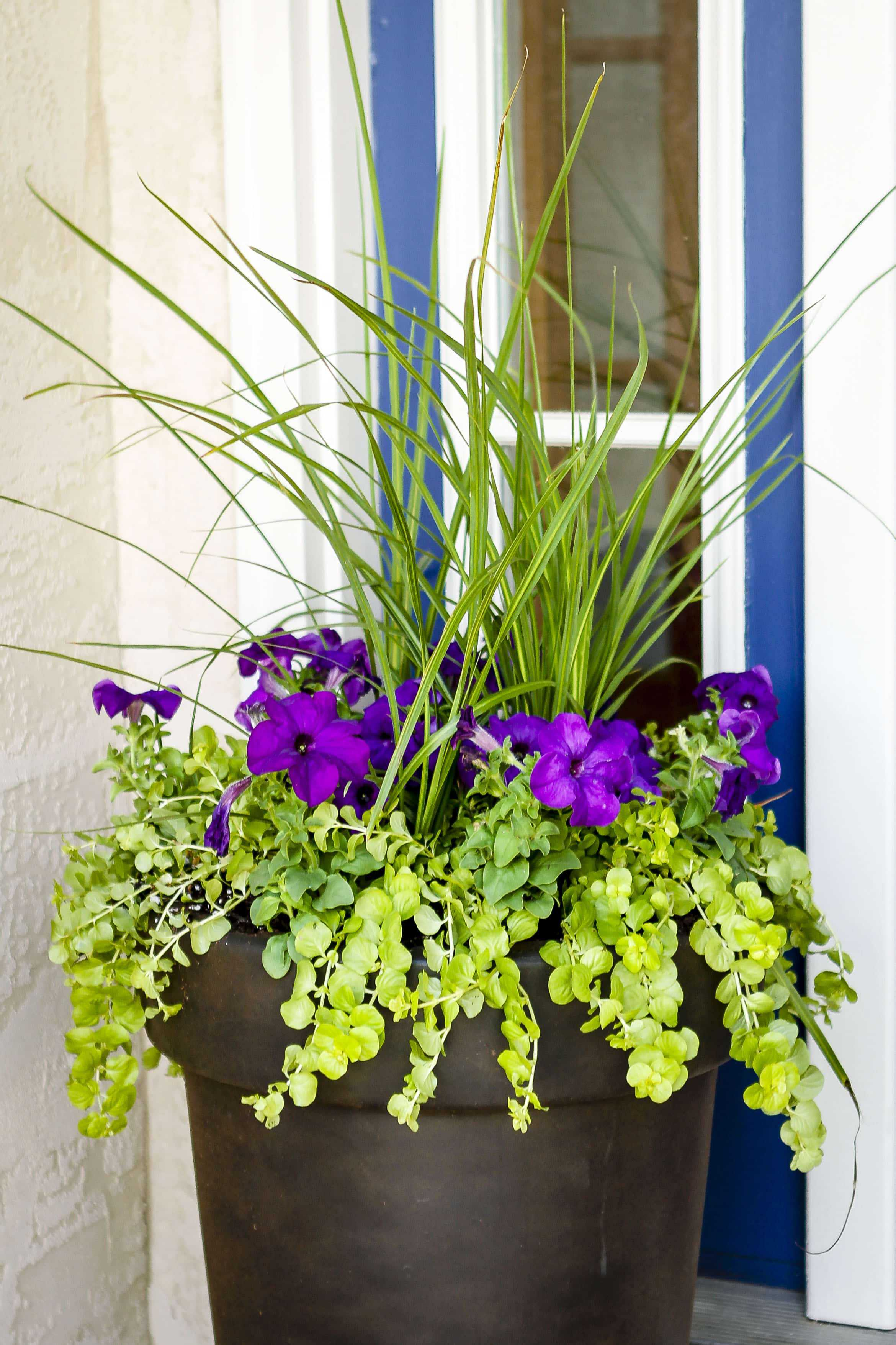 Garden Plant Containers
