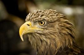 2012-07-22 - Priamursky Zoosad - Águila