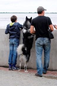 Incluso los perros sienten curiosidad - Even dogs have curiosity