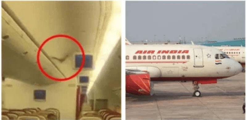 [VIDEO] Kelawar Terbang Dalam Kabin Punca Pesawat Berpatah Balik