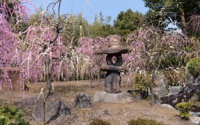 Spring has come at Jônangû Shrine