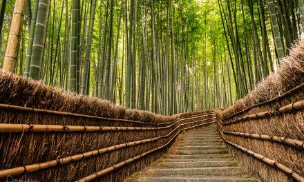 Arashiyama – Bamboo Grove