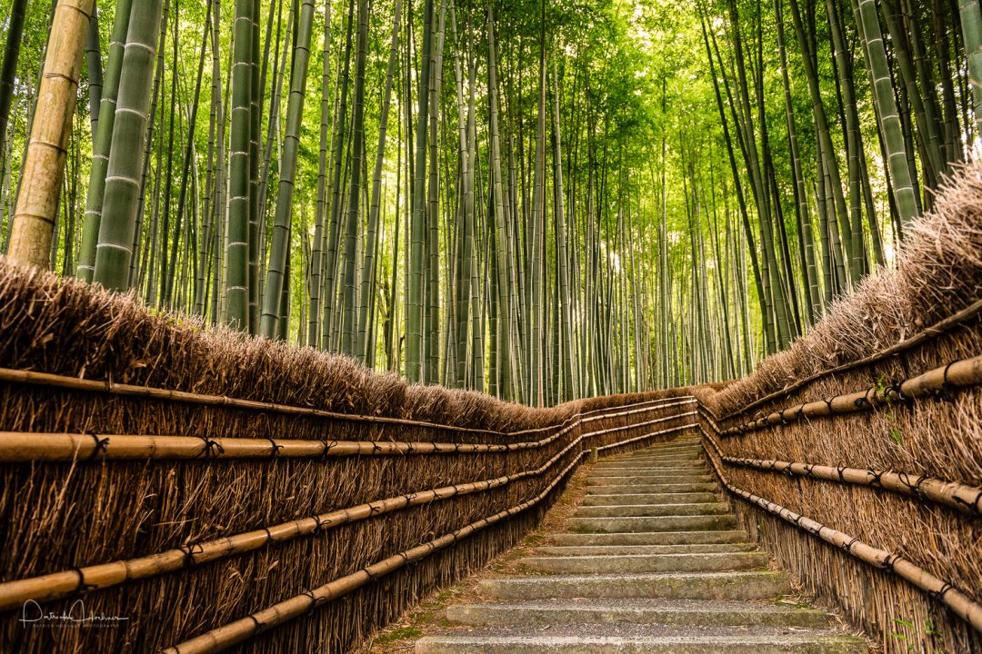 The famous bamboo grove in Arashiyama