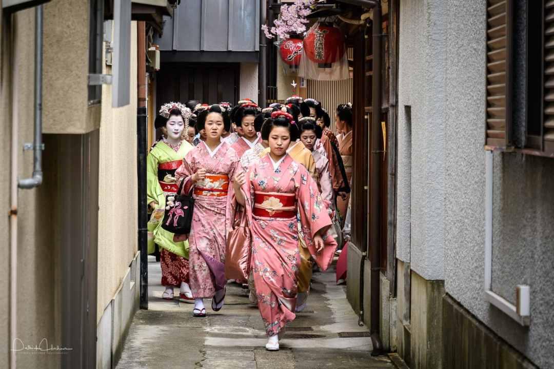 Geimaiko's Kyo-odori greetings (Aisatsu Mawari) in Miyagawa-Cho, Kyoto