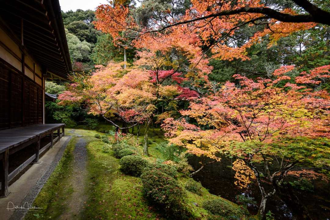 The garden of the Kokedera Temple, Kyoto