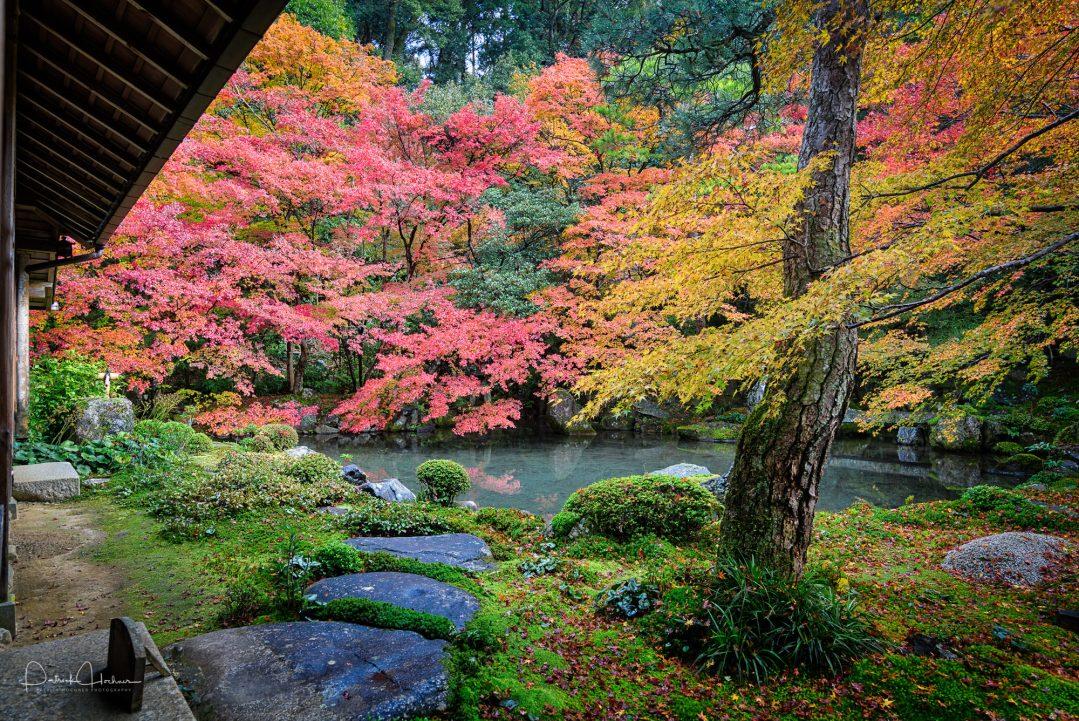Kôyô at Renge-ji Temple, Kyoto