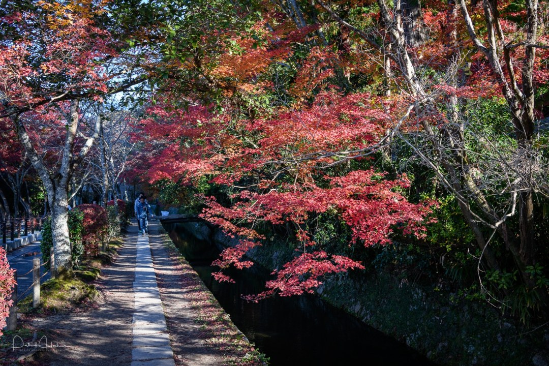 Path of philosophy during the Fall, Kyoto