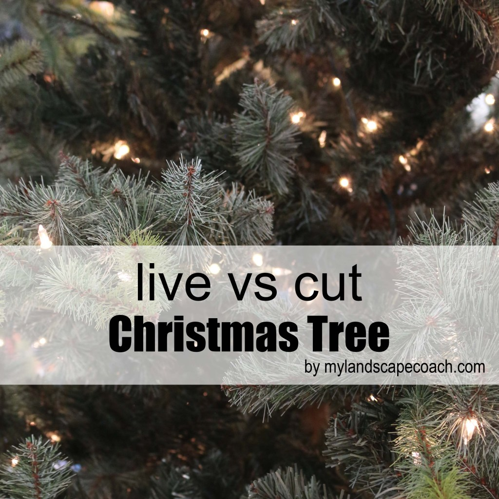 christmas trees live container tree vs cut tree - How Long Do Live Christmas Trees Last