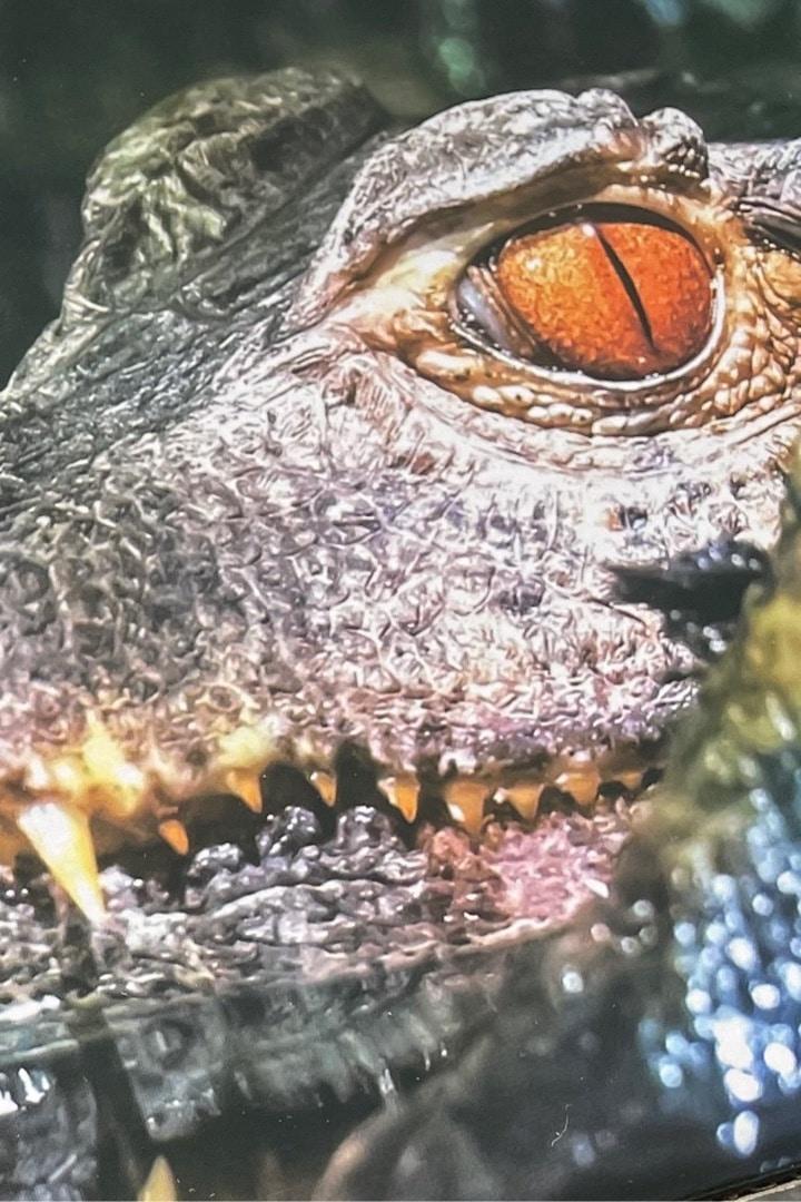 Crocodile animal simulation ship
