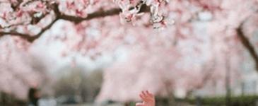 벚꽃 구경하기 좋은 날 : 벚꽃놀이 핫플레이스를 알아보자!