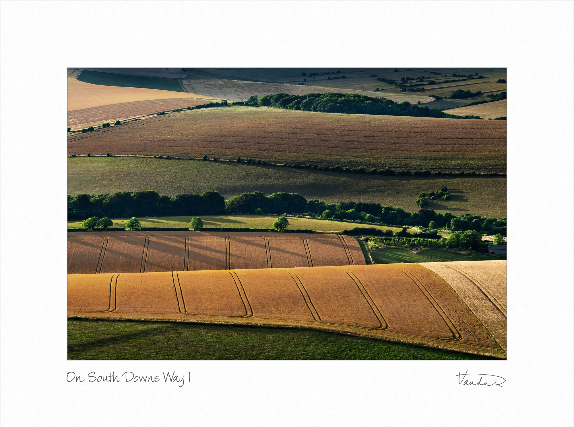 On Southdowns Way I