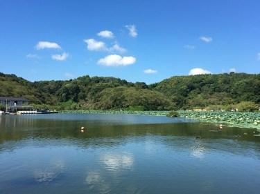 No.4841 久しぶりの池の周囲を散策1・・・2020/11/7