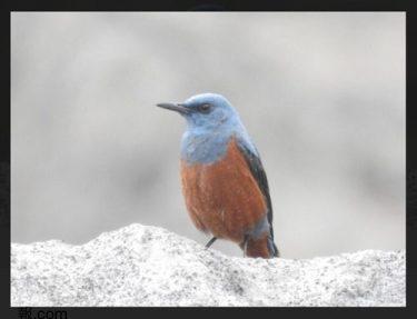 No.5035 青い鳥!!・・・ 2021/5/20