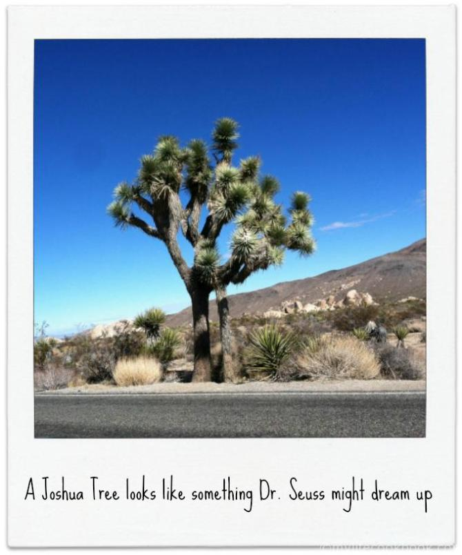 This is a 2 day trip around san diego including Joshua Tree National Park, Palm Springs and more.v