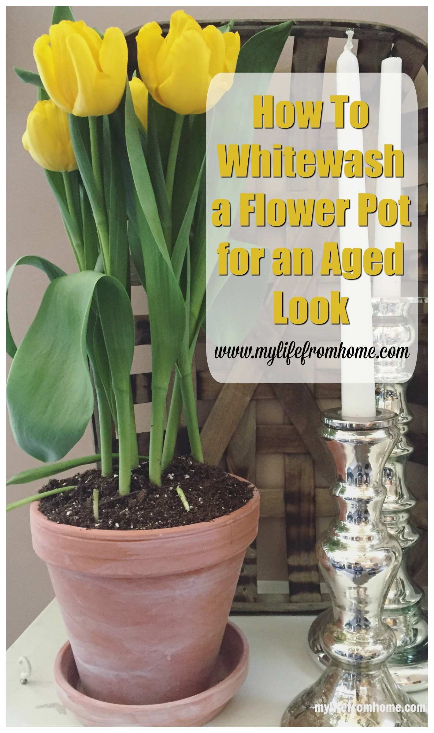 How to Whitewash a Flower Pot for an Aged Look by www.mylifefromhome.com
